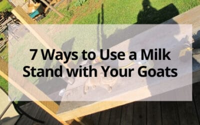 7 Ways to Use a Milk Stand with Your Goats