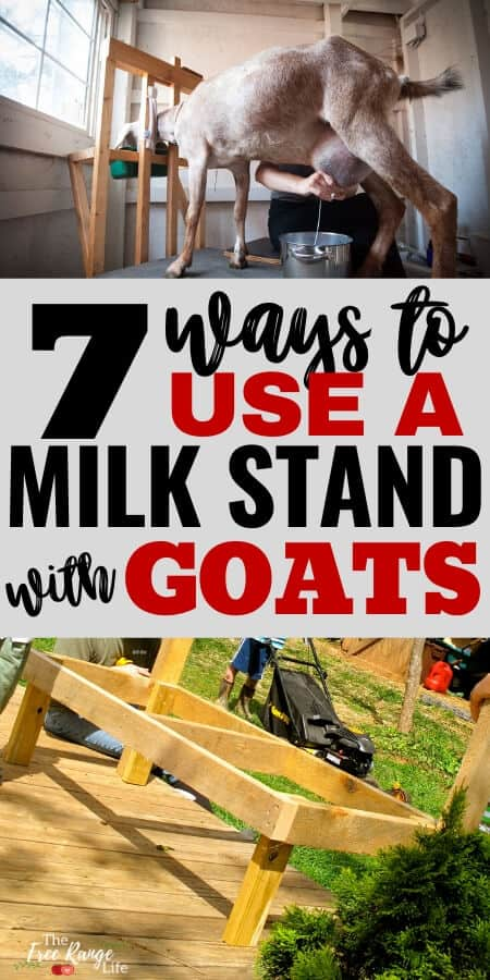 7 Ways to Use a Milk Stand with Your Goats text over a picture of a goat on a stand and a DIY stand being built