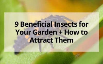 9 Beneficial Insects for Your Garden + How to Attract Them
