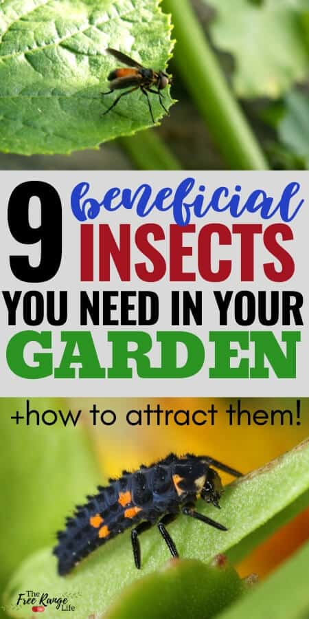 9 beneficial insects you need in your garden + how to attract them