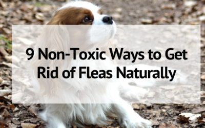 9 Natural Ways to Get Rid of Fleas in Your Home and On Your Pets