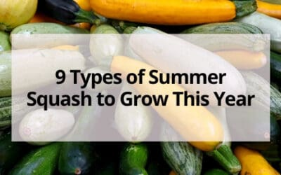 9 Types of Summer Squash to Grow This Year