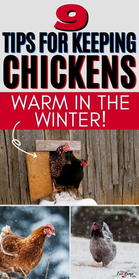 9 tips for keeping chickens warm in the winter