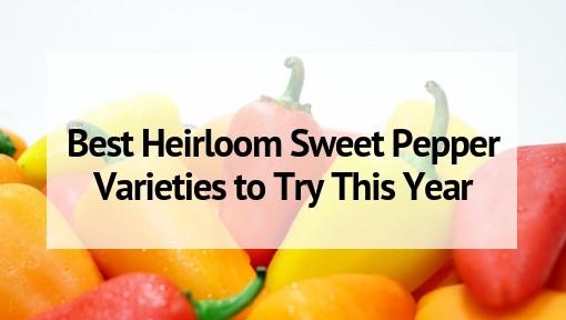 Best Heirloom Sweet Pepper Varieties to Try This Year