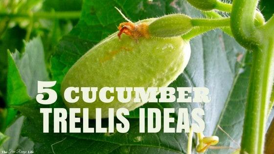 5 Easy, DIY Cucumber Trellis Ideas