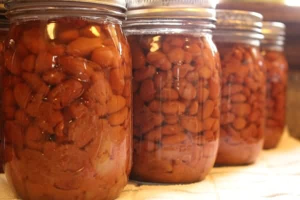 Canning Pinto Beans- processed jars sitting on a towel to cool