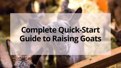 Complete Quick-Start Guide to Raising Goats