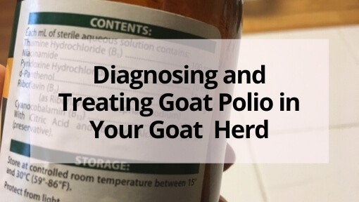 Diagnosing and Treating Goat Polio in Your Goat  Herd