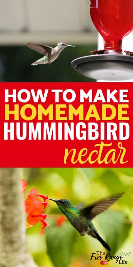 Homemade hummingbird nectar recipe to attract more hummingbirds