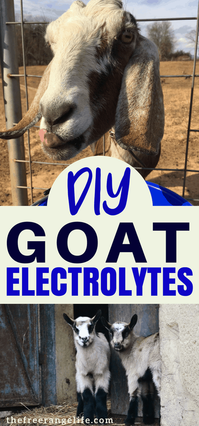 Raising Goats Tip: Electrolytes can rehydrate your goats when they are sick and get some nutrition back in their bodies. Learn how to make your own goat electrolytes at home!