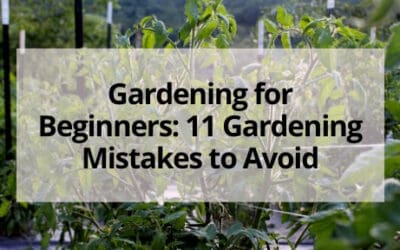 Gardening for Beginners: 11 Gardening Mistakes to Avoid