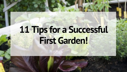 Gardening For Beginners: 11 Tips For A Successful Start   The Free Range  Life