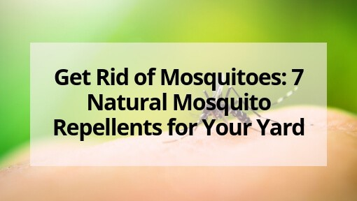 Get Rid of Mosquitoes: 7 Natural Mosquito Repellents for Your Yard
