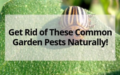 How to Get Rid of Common Bugs on Your Plants- Naturally!