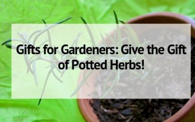 Gifts for Gardeners: Give the Gift of Potted Herbs!
