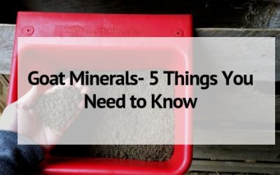 Goat Minerals- 5 Things You Need to Know for Your Goat's Health