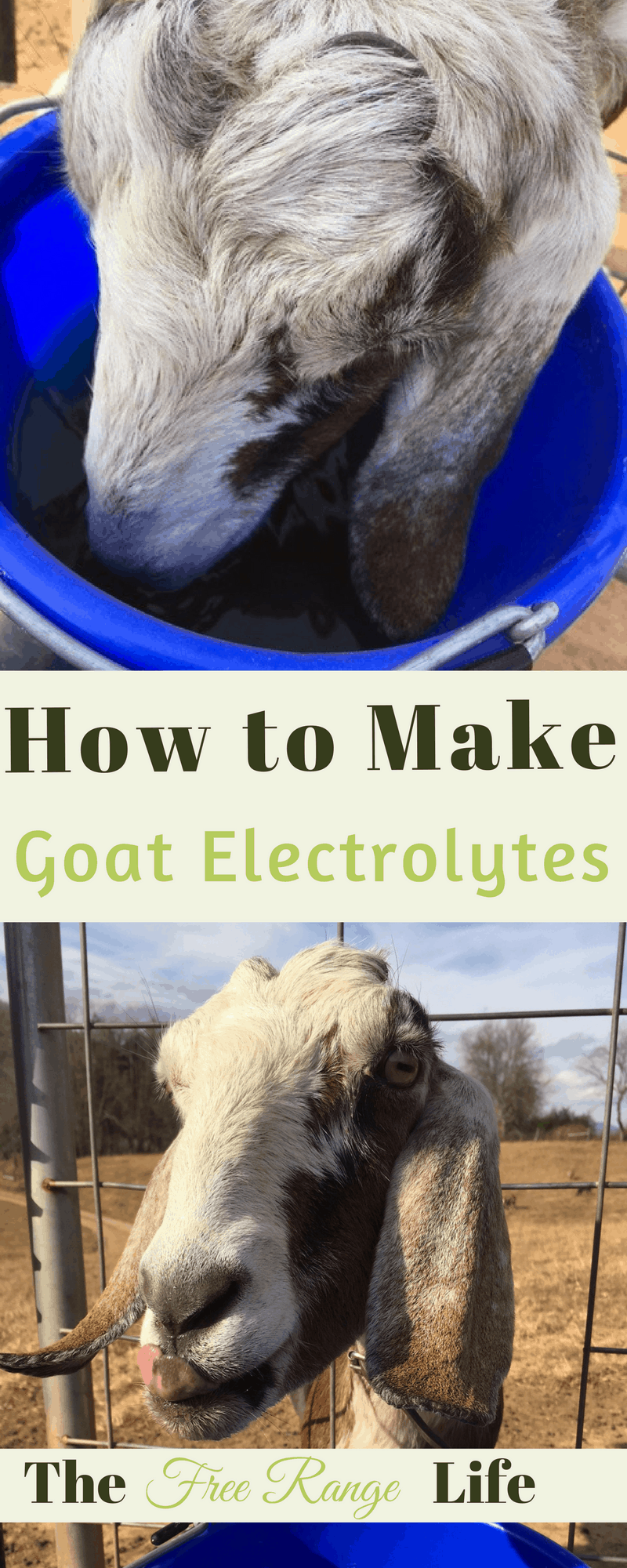 Electrolytes can rehydrate your goats when they are sick and get some nutrition back in their bodies. Learn how to make your own goat electrolytes at home!