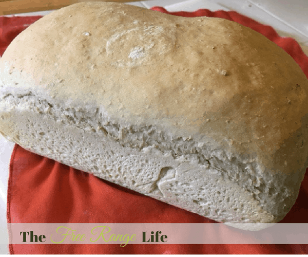 Honey Oatmeal Bread: OMG! I love this. There is nothing better than fresh homemade bread.