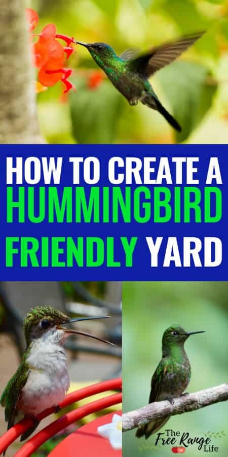 How to attract hummingbirds by creating a hummingbird friendly yard