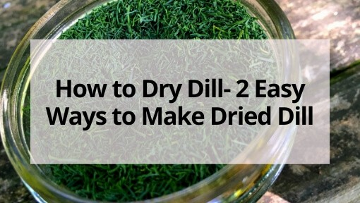 How to Dry Dill- 2 Easy Ways to Make Dried Dill
