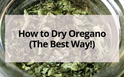 How to Dry Oregano (The Best Way!)