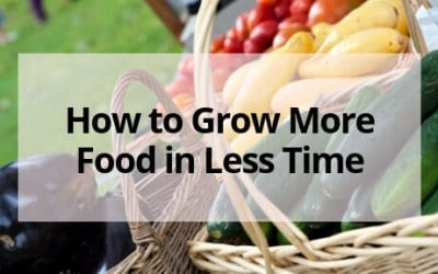 How to Grow More Food in Less Time