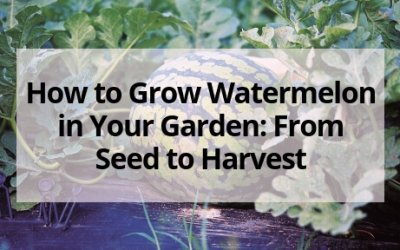 How to Grow Watermelon in Your Garden: From Seed to Harvest