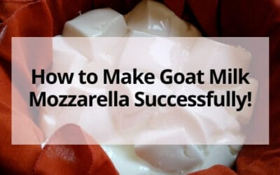 How to Make Goat Milk Mozzarella Successfully!