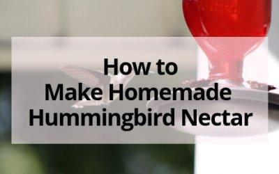 Easy Hummingbird Nectar Recipe (plus FAQ and Tips)