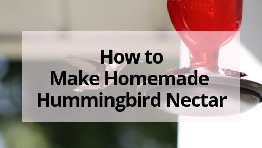Easy Homemade Hummingbird Nectar Recipe (plus FAQ and Tips)
