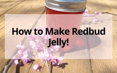 How to Make (and Can) Redbud Jelly at  Home