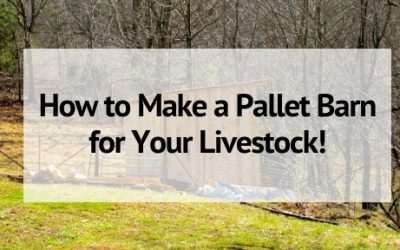 How to Make a Pallet Barn for Your Livestock!