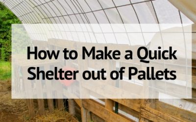 How to Make a Quick Pallet Shelter for Livestock