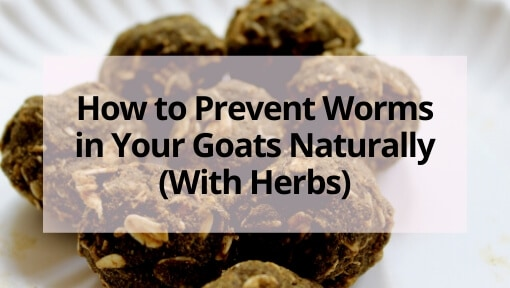 How to Prevent Worms in Your Goats Naturally (With Herbs)