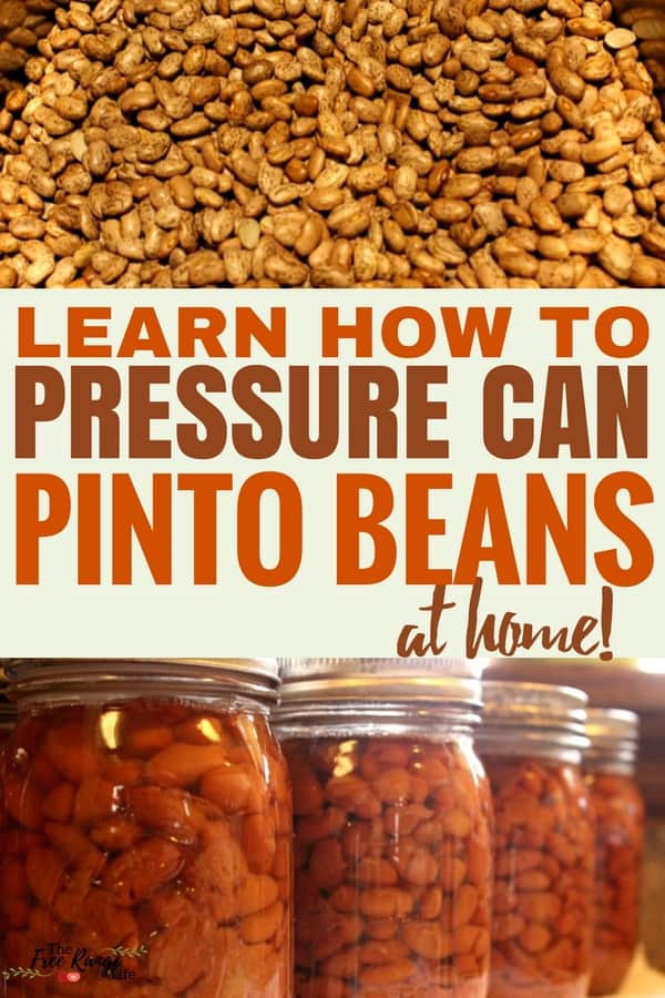 Pressure Canning: Did you know you can save money by canning pinto beans at home? Learn how to pressure can pinto beans for healthy, home-canned beans all the time!
