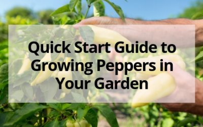 Quick Start Guide to Growing Peppers in Your Garden