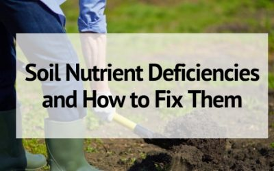 Soil Nutrient Deficiencies and How to Fix Them