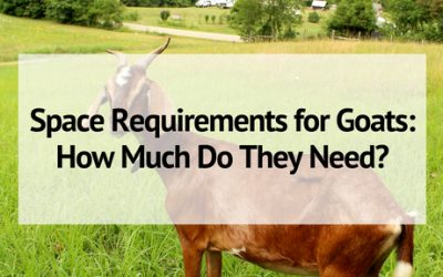 Space Requirements for Goats: How Much Space Do Goats Need?