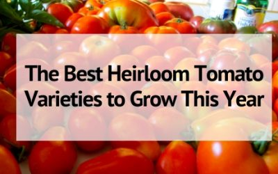 The Best Heirloom Tomato Varieties to Grow This Year