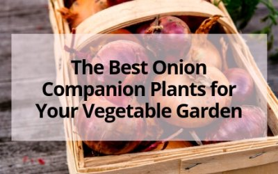The Best Onion Companion Plants for Your Vegetable Garden