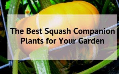 The Best Squash Companion Plants for Your Backyard Garden