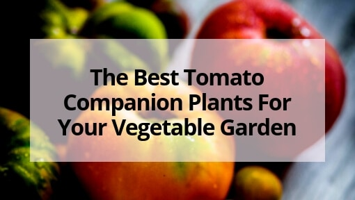 The Best Tomato Companion Plants For Your Vegetable Garden