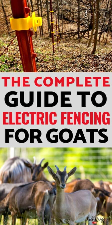 Raising Goats for Beginners: Fencing is an important part of raising goats. Learn how to use an electric fence for goats plus the pros & cons of electric fencing when it comes to goats.