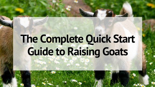 The Complete Quick Start Guide to Raising Goats