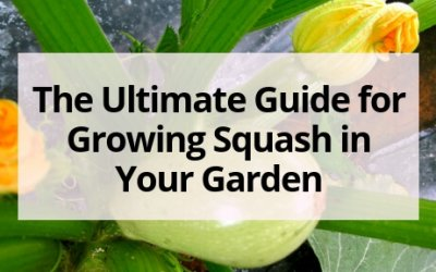 The Ultimate Guide for Growing Squash in Your Garden