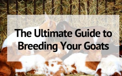 The Ultimate Guide to Breeding Goats