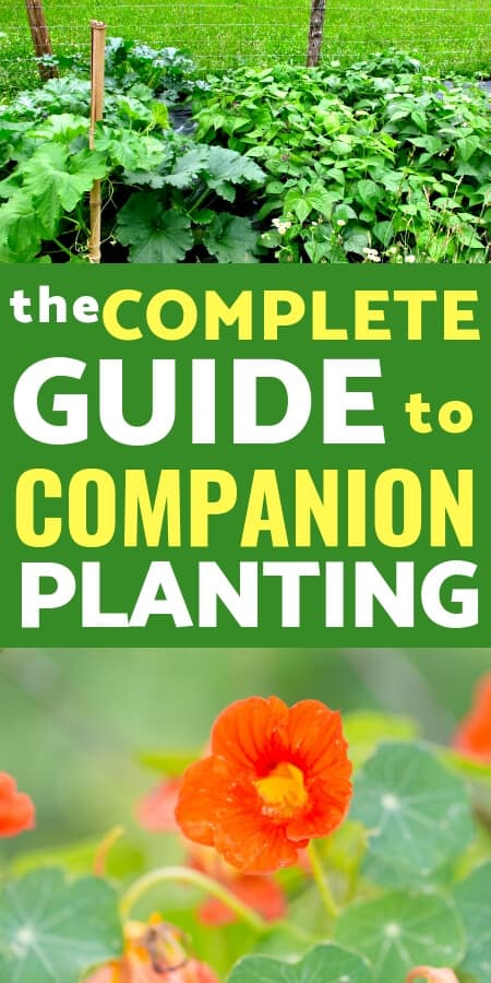 Vegetable Gardening Ideas: Learn how to use companion planting in your garden