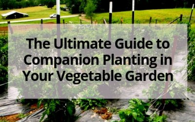 The Ultimate Guide to Companion Planting in Your Vegetable Garden