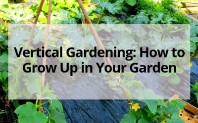 Vertical Gardening: How to Grow Up in Your Garden