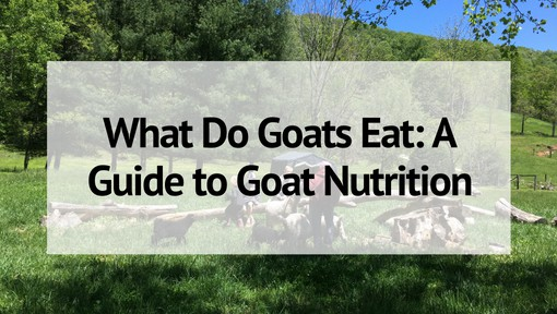 What Do Goats Eat: A Guide to Goat Nutrition